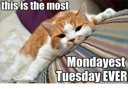 this-is-the-most-monday-est-tuesday-ever-cataddictsamony-mouse-4361203